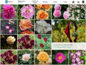 Crea una base de datos de tus plantas favoritas con Into Gardens