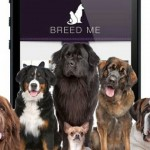 Zoa, la primera app de citas para mascotas
