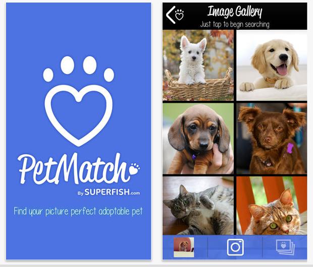 petmatch-app-mascotas