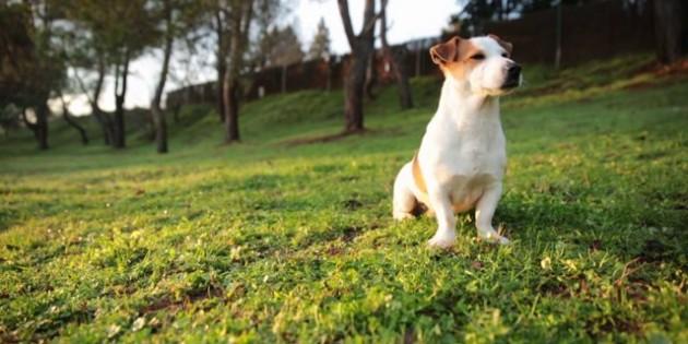 Wouwi, la app donde se encuentran tus mascotas