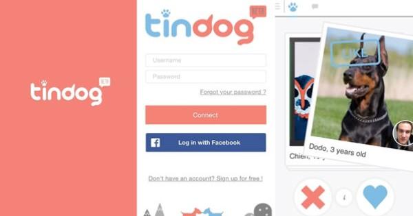 Tindog, otra app de dating para perros