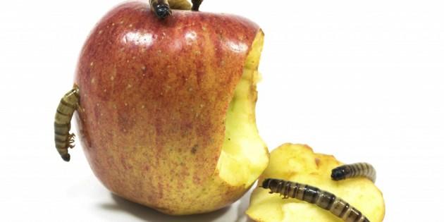 Apple anuncia las apps más populares afectadas por XcodeGhost