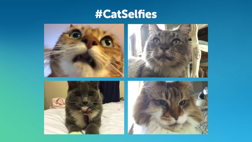 Candid Catmera, la primera app para que tu gato se haga selfies