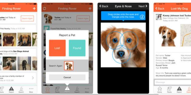 Finding Rover, la app que usa reconocimiento facial para encontrar mascotas perdidas