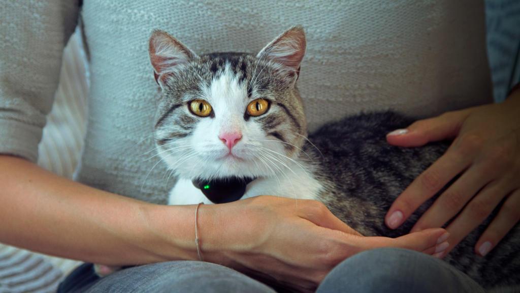 Moggie, el collar y la app con los que tu gato te habla