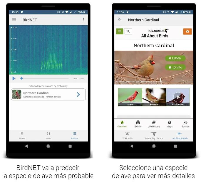 Esta app te dice de qué especie son los pájaros que se oyen desde tu balcón por su canto