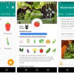 Maceto Huerto, la app para cultivar frutas y verduras en tu terraza